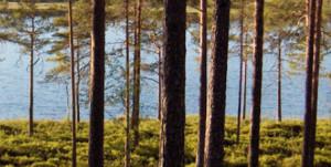 Ill bilde skog vann