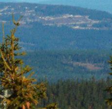 Vi trenger en sterk skogorganisasjon