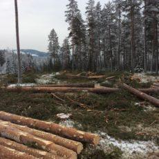 Året 2018 i skogen