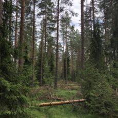 Skogsdrifta hittil i 2018