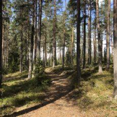Skogkveld i Mosjømarka 29. mai