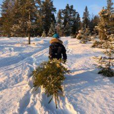 Juletrær oppfyller barns julegaveønsker