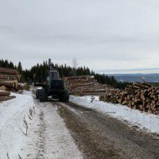 Året 2019 i skogen