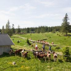 Sommerferieavvikling i Løiten Almenning