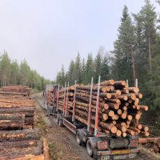 Året 2020 i skogen
